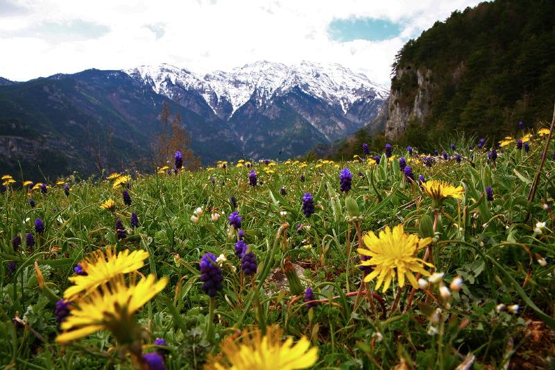 flora in olympus