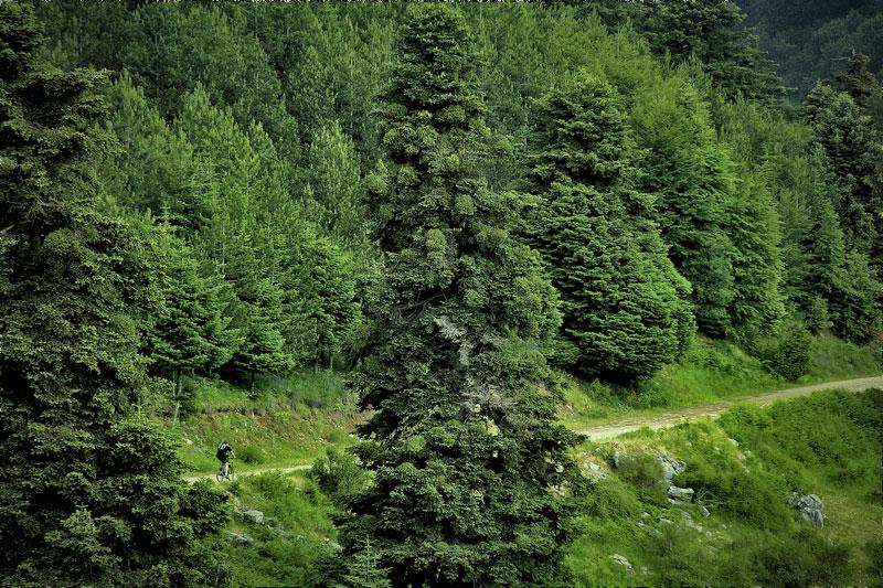 forest olympus